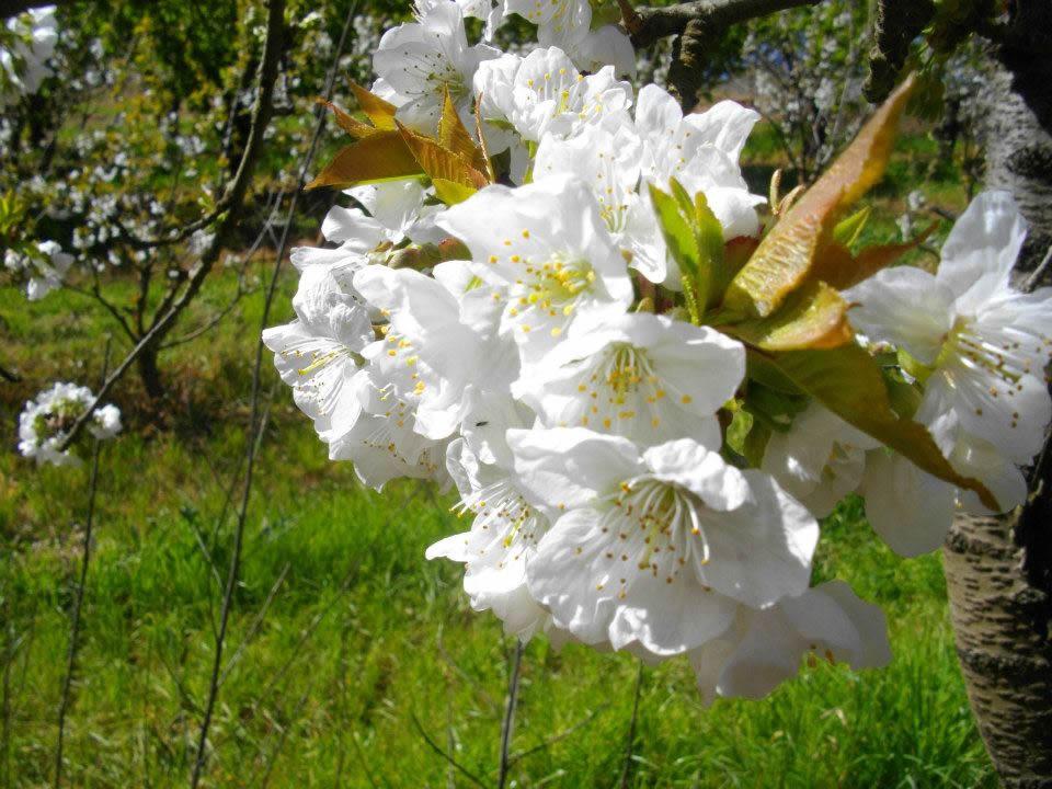 Blossom image